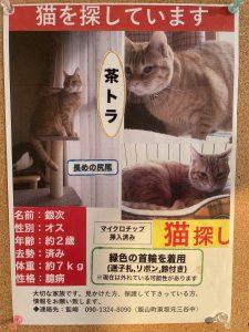 迷い猫を探しております